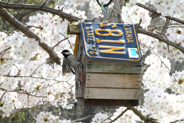 Bird House and Blossoms