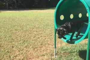 Dogparkagilityequipment1
