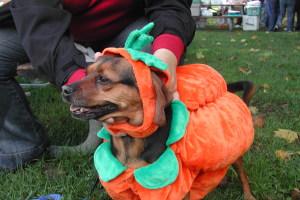 pumpkin6873